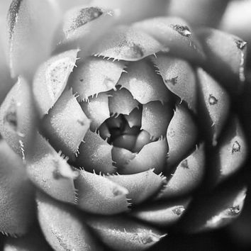 Black and White Photography | Succulent Cactus Abstract Macro Photo | Zen Home Office Bedroom Bathroom Decor