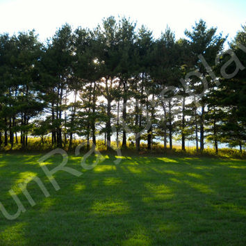 Pine Trees At Sunset Photograph 4X6 5X7 8X10 nature landscape green black and white sepia