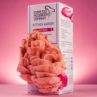 Hot Pink Oyster Mushrooms