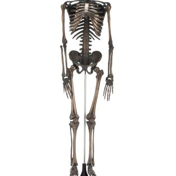 Faux Bronze Skeleton | Objects of Art | Decorative Accessories | Accessories | Decor | Z Gallerie