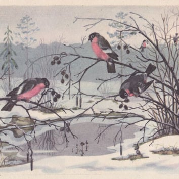 "Postcard Drawing by O. Khodatayeva ""Bullfinches"" -- 1959. Condition 8/10"