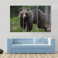 Moving Brown Bear In Tiaga Forest Canvas