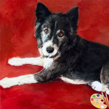 Border Collie Dog Portrait 548