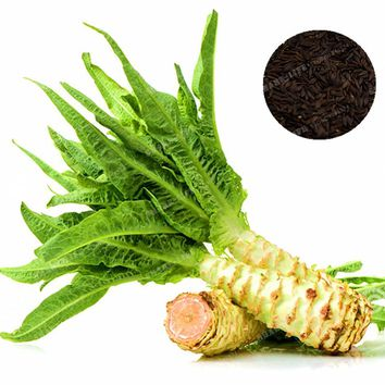 100 Pcs Asparagus Lettuce Seeds Very Delicious Organic Chinese Celtuce Seed Vegetable Seeds Home Garden Lactuca Sativa Plant