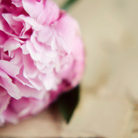 French country, peony, pink, romantic, flower wall art, cottage style, cream, beige, fine art print, rustic, 8x10 print, tattered pages