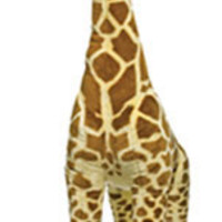 Jerry the GiraffeGiant Stuffed Giraffe Home to the Largest Stuffed Animals in the World