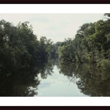 View looking up river at banks covered in thick summer greenery., framed black wood, white matte