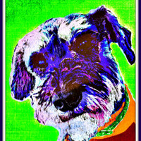 Dog art print poster Scottish Terrier Scottie dog art print pet pop art playroom family room wall decor teen girl art custom pet portrait