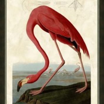 Audubon, Flamingo, Photographs