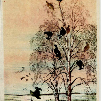 Grouse on Birches, Birds, Vintage Russian Postcard by V. Kurdov print 1958