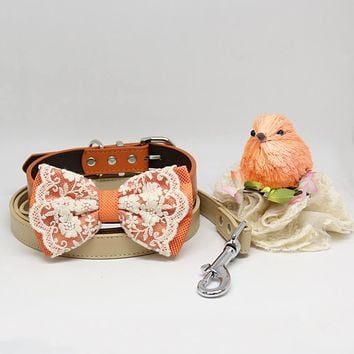 Orange and Lace Bow tie Dog collar Champagne Leash, Handmade, Pets wedding, Puppy Lovers, Lace