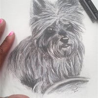 "Pencil Drawing of Yorkshire Terrier Dog Matted to 12"" x 16"" READY to SHIP"