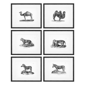 African Wildlife Prints Set | Eichholtz Historical Animals