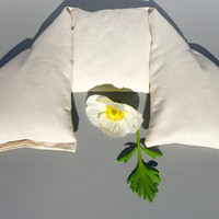 Organic cotton twill neck pillow-organic fill and fabric!