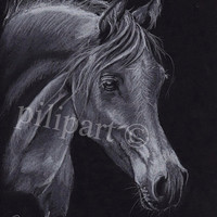 Traditional drawing Arabian thoroughbred horse study