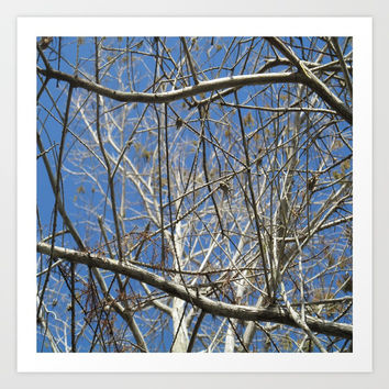 Crisp Cold Florida Morning Art Print by Gwendalyn Abrams