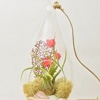 "Bliss Gardens Air Plant Terrarium with Rose Quartz 7"" Teardrop Glass / Pretty Pink Countryside"