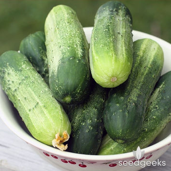 Boston Pickling Cucumber Heirloom Seeds - Non-GMO, Open Pollinated, Untreated
