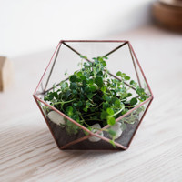 "glass terrarium ""little icosahedron"""