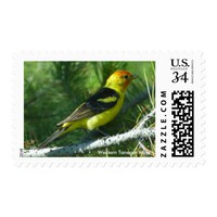 Western Tanager bird close view Postage