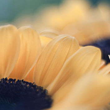 Flower Photography Sunflower Photo Print Nature Photography Floral Wall Art Flower Fine Art Print Yellow Wall Decor Floral Photo Print