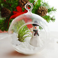 Frosty the Snowman - Glass Globe Hanging Terrarium Kit w Tillandsia Air Plant - Home Decor - Gift - Decor