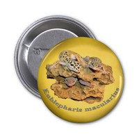 Leopard gecko design for all! 2 inch round button