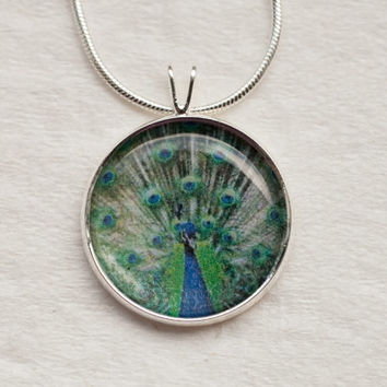 Peacock necklace-colorful,bird,zoo,feathers