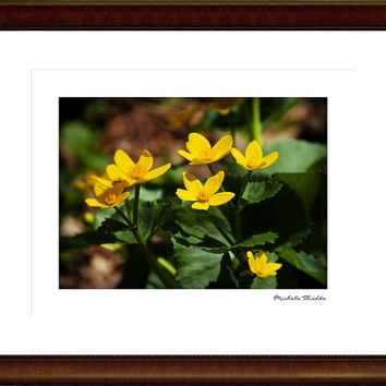 Woodland Floral Photography Flower,lush green foliage,yellow,buttercups,wisconsin wildflowers,wildflowers in the spring, botanical print