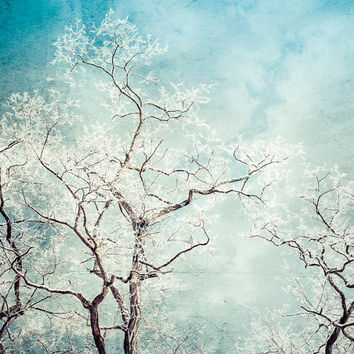 Tree Photography, Modern Wall Decor, Winter Landscape, Trees and Hoar Frost, Winter Photography, Aqua Wall Decor, Contemporary Art