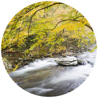 Paul Moore's Smokey Mountain River Circle wall decal