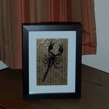 Indonesian Scorpion mounted in a real wood  shadow box frame