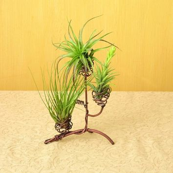 Elevated Triple Air Plant Holder