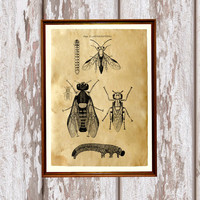 Cabin poster Fly print Antique art Insect decor AK232