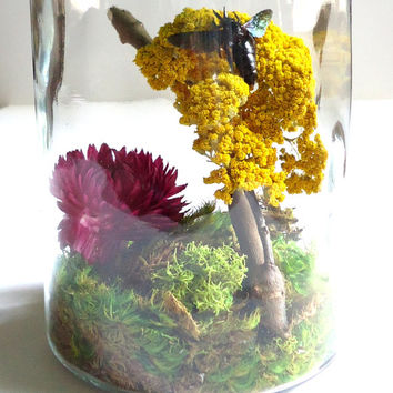 Bee terrarium - Real Bee specimen - unique gift - insect display - xylocopa latipes - taxidermy - entomology