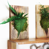 Fern and Moss Hanging Rustic Wood Flat -  Care Free, Real Preserved Plant.