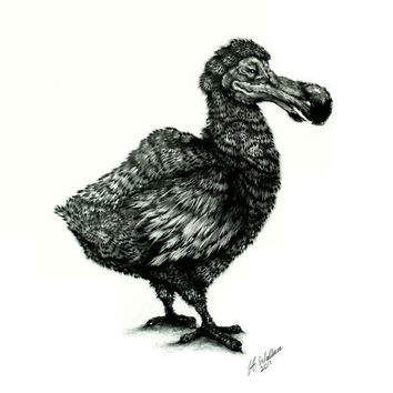 Dodo Bird  Original Pencil drawing 16 x 11.5 inch by HeidiCreations