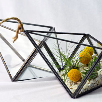 Modern Geometric Terrarium - Black and Yellow - Air Plant Terrarium  -Green Gift - Home Decoration
