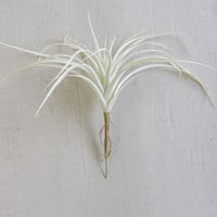 Set of 6 White Air Plants Single Stem Large