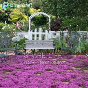 200 seeds/pack Creeping Thyme Herb the Seeds of Perennial Flower Garden Thymus landscaping, Bonsai Flower Seeds