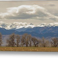 Cottonwood Trees Rocky Mountain View Metal Print
