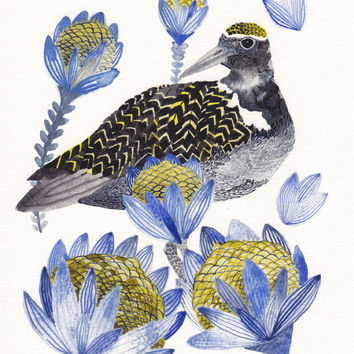 Plover and Protea- Archival Print