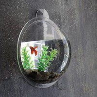 Fish Bubbles - Wall Hanging Fish Tank - 3.6L:Amazon:Pet Supplies