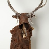 Stag Head by Barbara & Richard Keal Assorted One Size House & Home