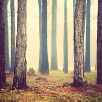 woods - trees fog mist forest woodland - photography print | slightclutter - Photography on ArtFire