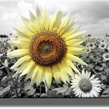 Big Sunflower on Farm Picture on Acrylic , Wall Art Décor, Ready to Hang!