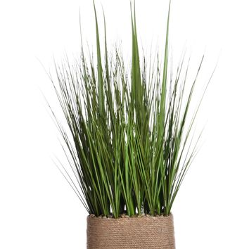 "28"" Tall Onion Grass in Hemp Rope Container"