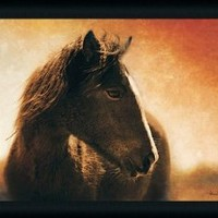 Monero Mustang by Patricia Leigh Majestic Horse Head 27x21 Framed Art Print Picture with Glass