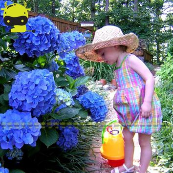 'Blue Enchantress' Hydrangea Seeds, 10 Seeds/Pack, Showy Shrub Bonsai Flowers For Home Garden Planting