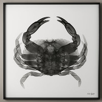 Nick Veasey X-ray Photography: Crab